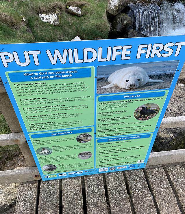 Coast_wildlife